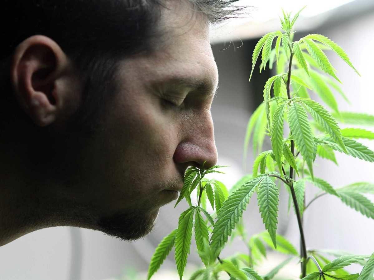 Как марихуана влияет на давление?