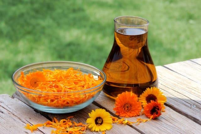 В состав лекарственного растения входят каротиноиды, стерины, флавоноиды, эфирные масла, кумарины