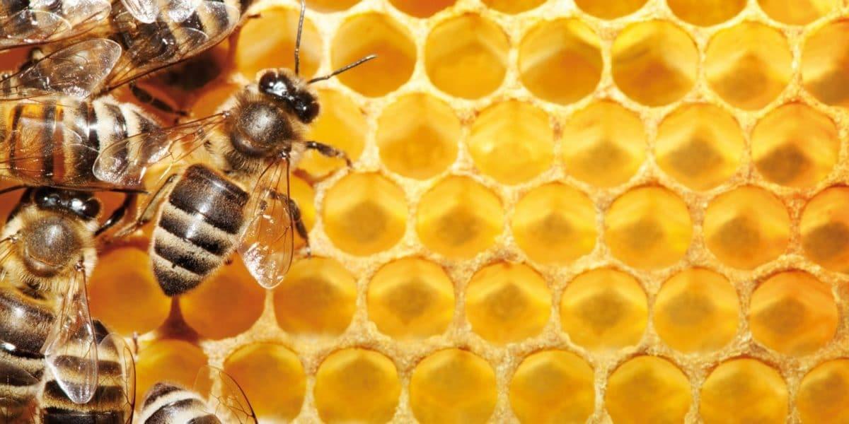 Мед повышает давление или понижает?
