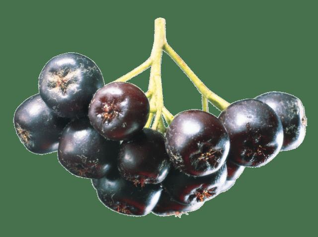 Ввиду многочисленных полезных свойств черноплодка может использоваться при лечении ряда недугов