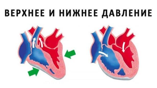 Помимо индивидуальных особенностей работы почек и сердца, повышение давления может быть связано с возрастными изменениями