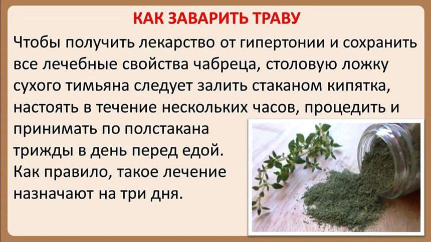 Чабрец или тимьян ползучий