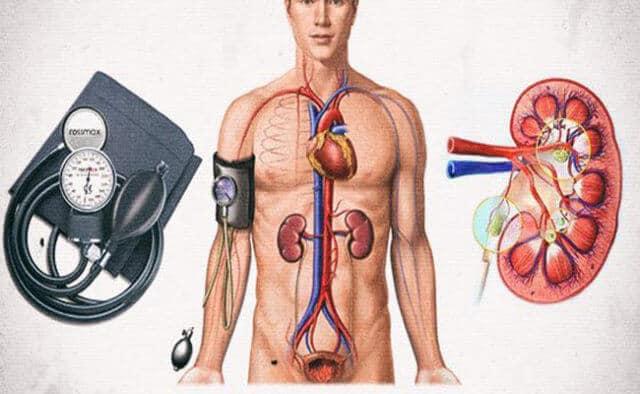 Для нормальной работы парного органа требуется определенное АД, которое почки себе обеспечивают, вырабатывая вещество ренин