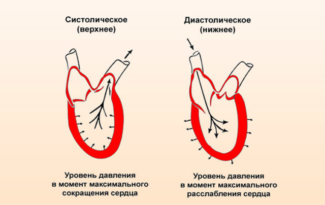 На разных отрезках кровообращения в организме человека численное значение давления отличается друг от друга