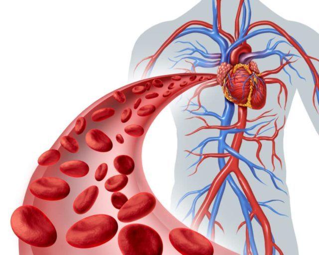 Ученые утверждают, что проявления атеросклероза никак не отражается на степени выраженности артериального давления