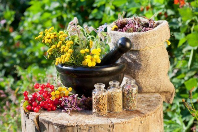 Лечить болезнь с помощью лекарственных растений можно на любой стадии